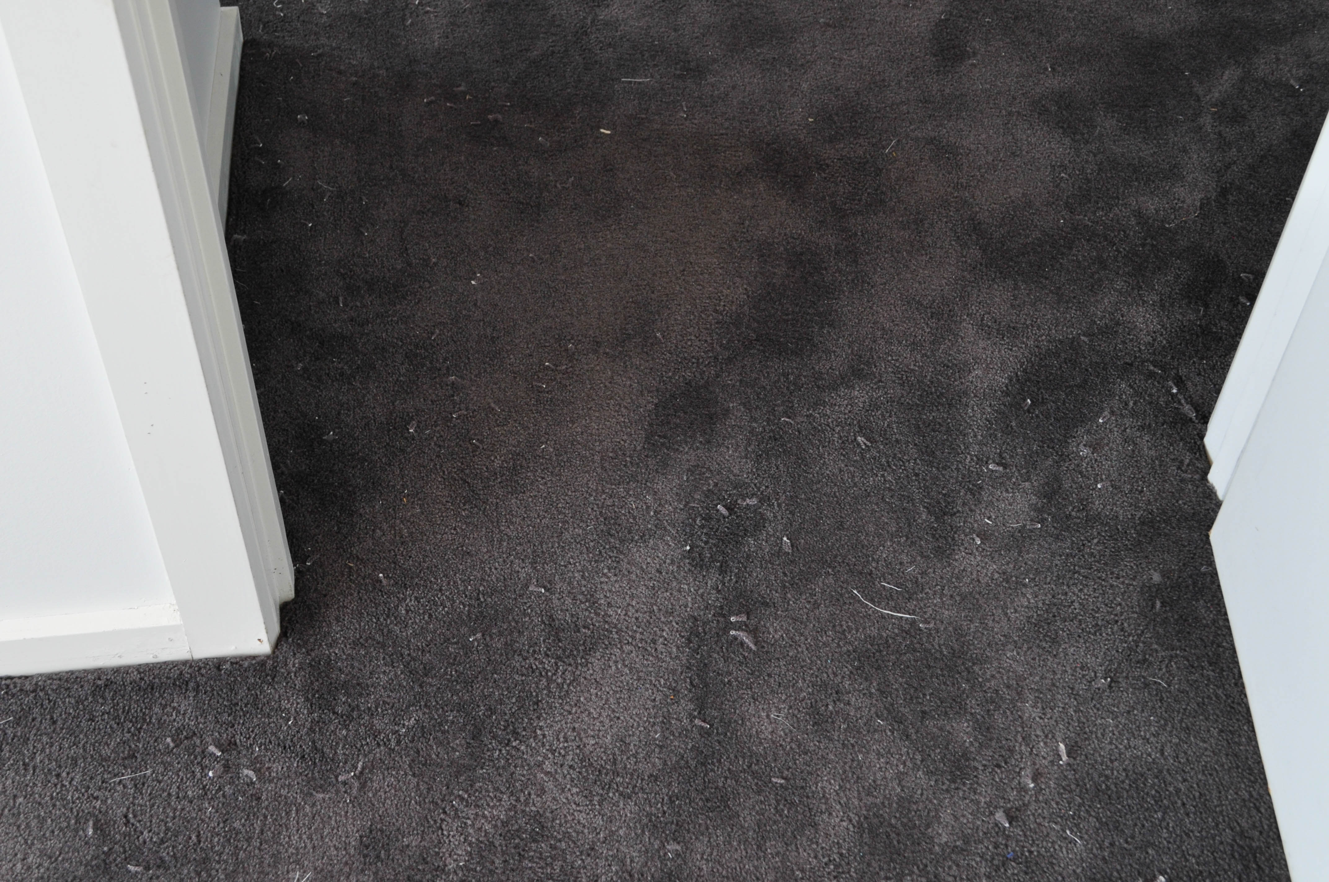 charcoal colored, plush-pile carpet installed in a room in the suburb of Caroline Springs Vic 3023 by Concord Floors.